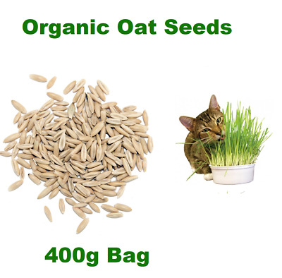 Natural  Sweet Oat Grass Seeds for Cats and other Pets 400g