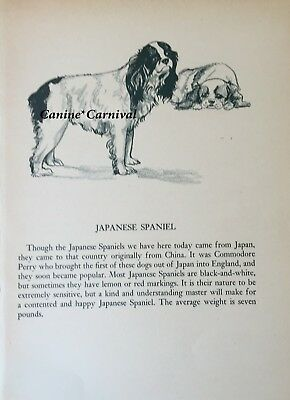 RARE JAPANESE SPANIEL CHIN ART & BREED DESCRIPTION 1945  VINTAGE Art