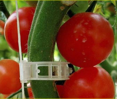 100 XL Tomato and Veggie Garden Plant Support Clips for Trellis Twine Greenhouse