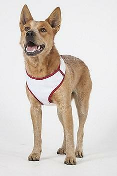 Walking Mesh Harness For Dogs-  built in insect control SALE $10 SLASHED OFF RRP