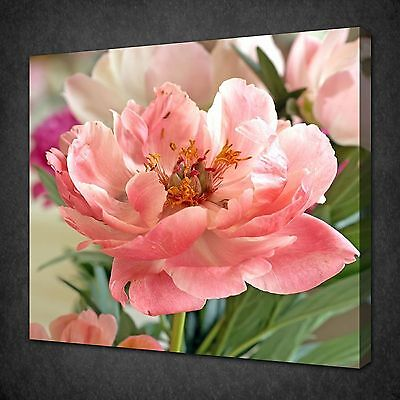 Beautiful Pink Peony Blossom Flower Canvas Print Wall Art Ready To Hang