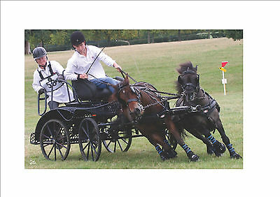 zilco sl shetland pair harness for ponies 8hh to 10hh with empathy breast plate