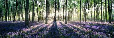 (LAMINATED) Enchanted Forest Sunrise Door POSTER (158x53cm) New Wall Art