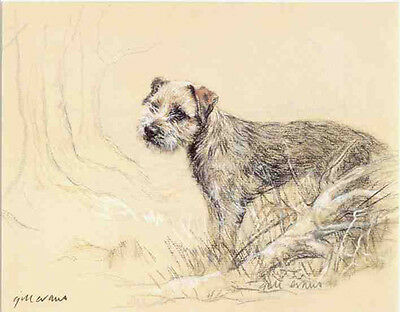 BORDER TERRIER DOG LIMITED EDITION PRINT - Signed Artist Proof - Numbered 18/85