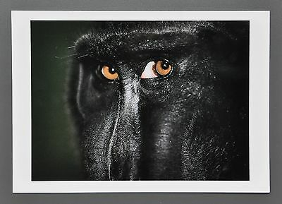 Esko Männikkö Ltd. Ed. Photo 17x24cm Ohne Titel 2005 Animal Eyes Tieraugen Ojos