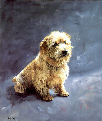 "NORFOLK TERRIER DOG FINE ART LIMITED EDITION PRINT - ""Stay"" by Pippa Thew"