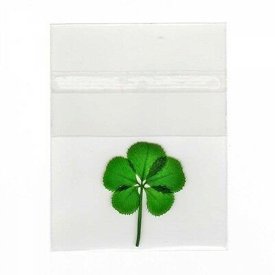Pressed and Preserved 5 Leaf Clover in Cello Sleeve Item CL5L