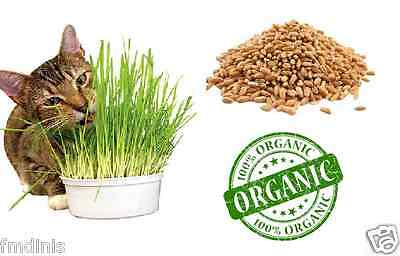 Wheat Grass / Cat Grass Seeds Natural Organic Easy / Fast Grow 500g