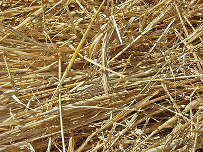 80 gram of barley straw for natural algae treatment in ponds direct from farm