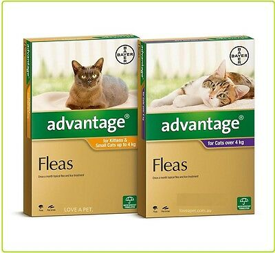 Advantage Flea Treatment For Cats All Sizes