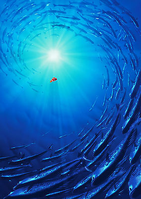 Finding Nemo (2003) V3 - A1/A2 POSTER **BUY ANY 2 AND GET 1 FREE OFFER**