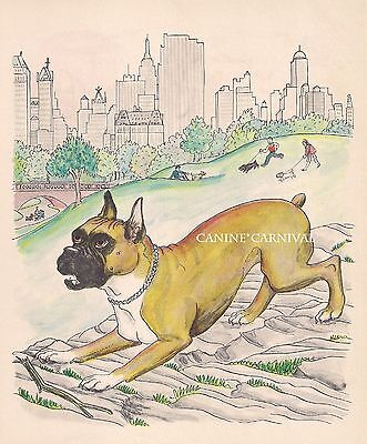 RARE VINTAGE Fawn Boxer Dog In NYC Central Park  Art Print 1950