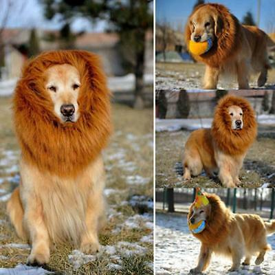 Grand Chien Lion Perruque Costume Mane Robe Cheveux Vêtements Divin Halloween DD