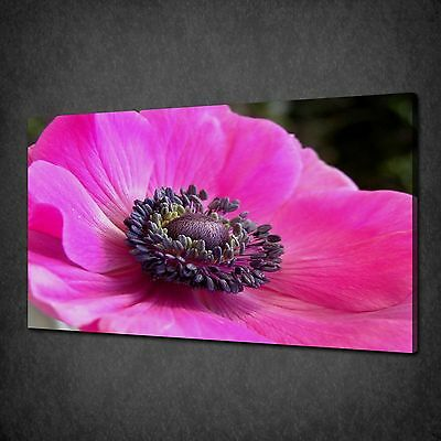 Pink Elegant Peony Flower Modern Canvas Print Wall Art Picture Ready To Hang