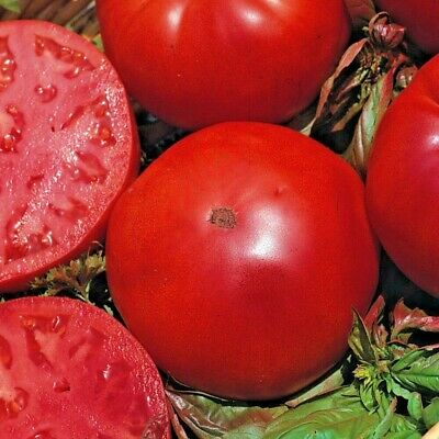 Tomato Super Marmande VR Appx   200 seeds Italian Beefsteak type