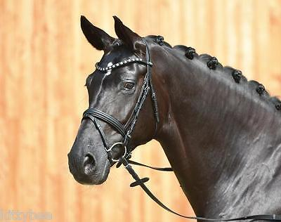 BUSSE  Dressage Bridle FASHION - New! Full or cob size