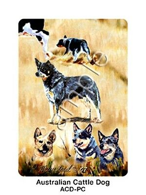 AUSTRALIAN CATTLE DOG  Deck of Playing Cards by Maystead