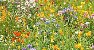 Wild Flower Seed Mix - 5 Gms -' Meadow Mix '