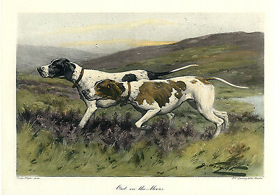 "POINTER ENGLISH GUN DOG FINE ART PRINT ENGRAVING ""Out on the Moors"""
