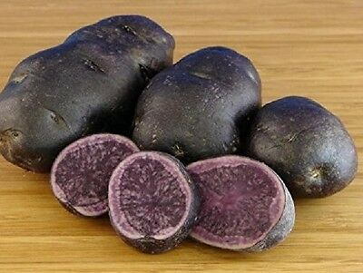 Salad Blue Seed Potatoes - Certified Scottish Seed (Class SE) Second Early