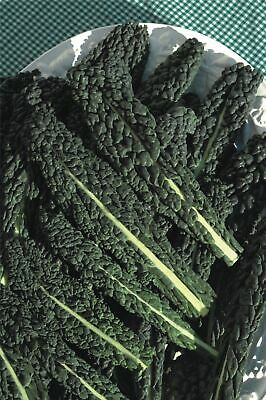 Vegetable - Kings Seeds - Picture Packet - Kale - Nero di Toscana - 175 Seeds