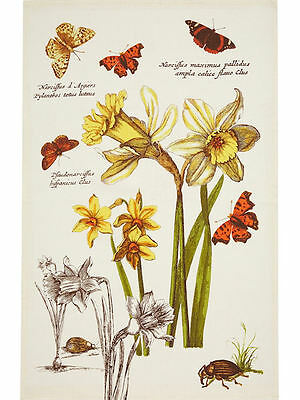 RHS Narcissus Ulster Weavers Linen Tea Towel - flowers, floral