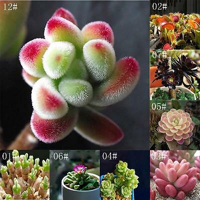 22 Kinds 60 Pcs Succulents Seeds Potted Plant Flower Office Home Living Room AD