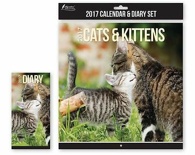 2017 Square Cats & Kittens Month To View Photo Wall Pet Calendar with Slim Diary