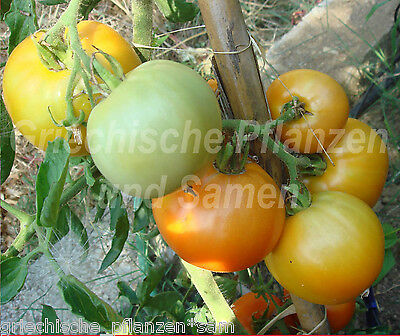GARDEN PEACH Tomate yellow all types of tomatoes 10 Seeds