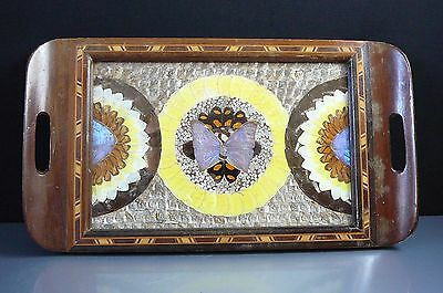 Antique Butterfly Wing Tray Circa Early 1900's (Stunning Example)