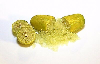"""Finger Lime """"yellow"""" Grafted Plant"""