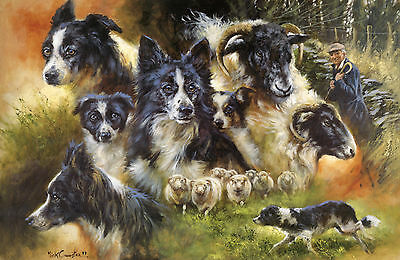 BORDER COLLIE WORKING SHEEPDOG DOG LIMITED EDITION PRINT - the late Mick Cawston