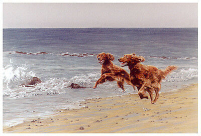 IRISH RED SETTER GUN DOG FINE ART LIMITED EDITION PRINT Time and Tide Paul Doyle
