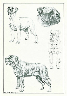 Dog Art Print Bullmastiff Dog by Davidson