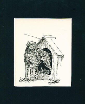 Dog Print 1926  Irish Wolfhound in Doghouse by Charles Livingston Bull ANTIQUE