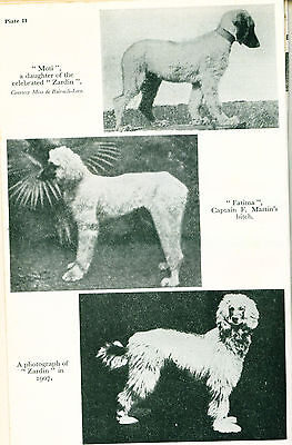 Dog Book 1964 The Afghan Hound Handbook by Hubbard England
