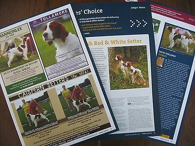 Irish Red & White Setter Dog Breed Kennel Clippings X 25