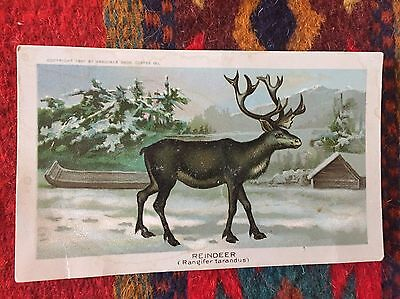 Arbuckle coffee Trade Card Xmas Reindeer Antique Lithograph