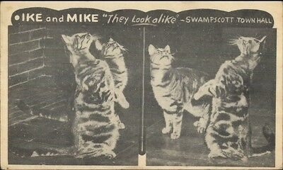Swampscott MA Town Hall Cats Mike & Ike Postcard