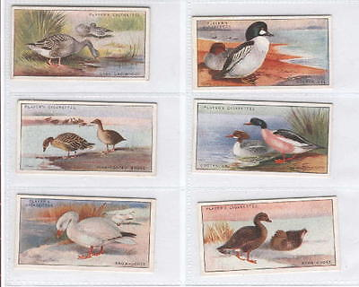Full Set - 1927 - Game Birds and Wild Fowl - Player