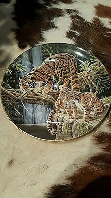 Wedgewood Collectable Plate Big Cats Clouded Leopards Compton & Woodhouse