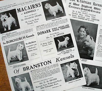 WEST HIGHLAND WHITE TERRIER DOG BREED KENNEL CLIPPINGS  all from 1940s-50s x 40