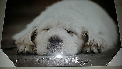 30x40cm Canvas Puppy Picture - New - Ready to Hang