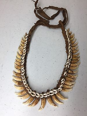 Antique New Guinea Dog Tooth Necklace