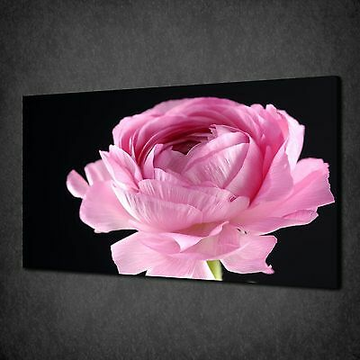 Pink Peony Flower Close Up Modern Canvas Wall Art Print Picture Ready To Hang