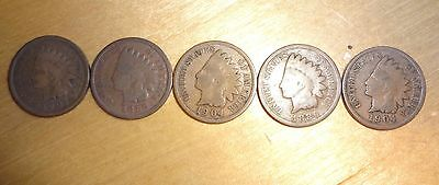 5 Indian Head Cent's