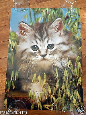 "Cute Kitten with Big Eyes 16 ½"" x 23"" Poster"