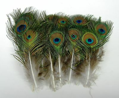 "25 Pcs MINI PEACOCK Natural Feathers 2-5"" Pads/Trim/Hat/Halloween"
