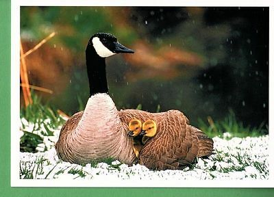 CUTE!! GOOSE AND GOSLINGS CHRISTMAS HOLIDAY CARDS by PALM PRESS (5)