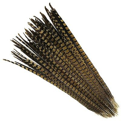 "10 Pcs ENGLISH RINGNECK PHEASANT Natural Feathers 18-20"" Halloween/Hats/Costume"